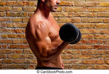 músculo, formado, cuerpo, hombre, con, pesas, en, pared...