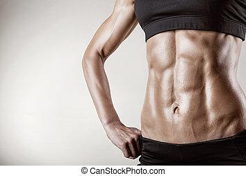 músculos,  abdominal