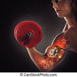 músculos, engranaje