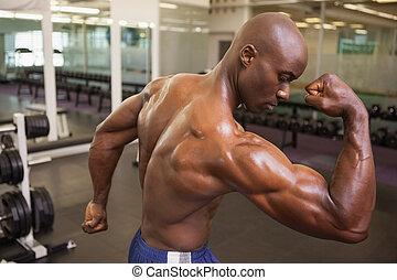 músculos, shirtless, muscular, flexionar, homem, vista traseira