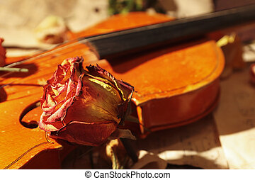 música, vindima, rosas, violino, closeup., secado, foco., seletivo, folha
