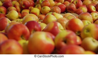 mûre, beaucoup, pommes
