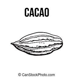 mûre, fruit, isolé, illustration, main, vecteur, dessiné, cacao