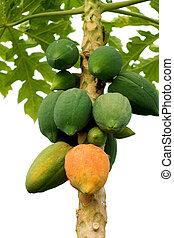 mûrir, arbre., papaye