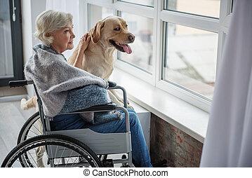 mûrir, tranquille, apprécier, femme, temps, handicapé, chien