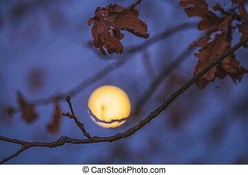 měsíc, grafické pozadí, větvit, strom