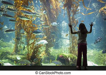 młoda dziewczyna, wstając, przeciw, wielki, akwarium,...