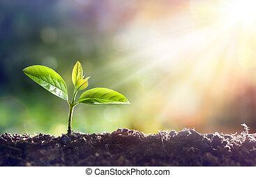 młoda roślina, rozwój, w, światło słoneczne