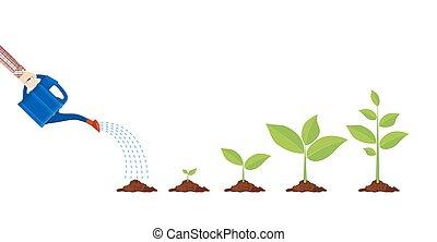 młoda roślina, z, konewka