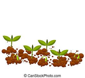 młody, germinal, rośliny