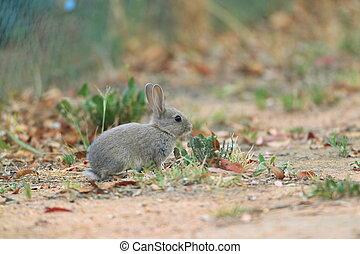młody, mały, królik, w, przedimek określony przed rzeczownikami, łąka