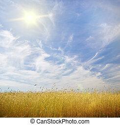 młody, pszenica, na, błękitne niebo, tło