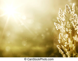 művészet, nyár, háttér., napkelte, képben látható, a,...