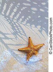 művészet, tenger csillag, a parton, háttér