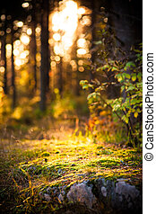 művészi, fény, alatt, erdő