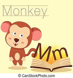 m, illustrator, vocabul, macaco