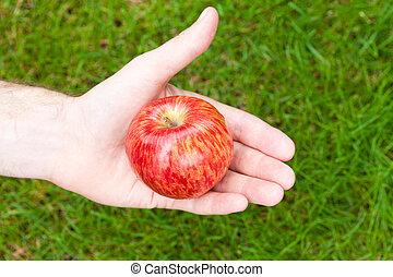 maçã, em, seu, mão, contra, a, capim
