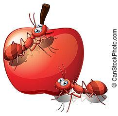 maçã, formigas