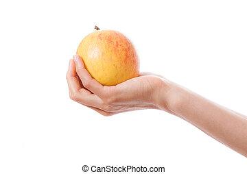 maçã, mão feminina