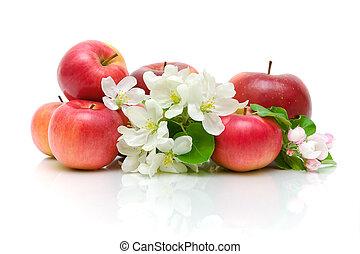 maçã, maçãs, fundo, flores brancas, vermelho