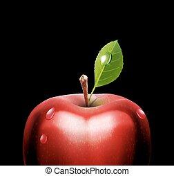 maçã, vetorial, close-up, vermelho