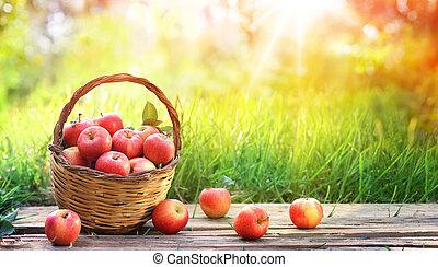 maçãs vermelhas, de, cesta, em, jardim, -, colheita, conceito