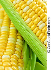 maíz, cicatrizarse
