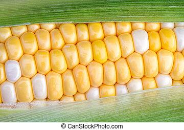 maíz dulce, mazorca