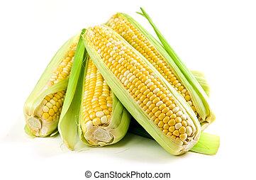 maíz, fondo blanco, orejas