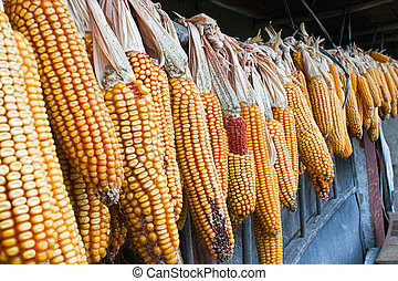 maíz secado