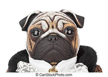 maître d'hôtel, chien jouet, carlin, déguisement