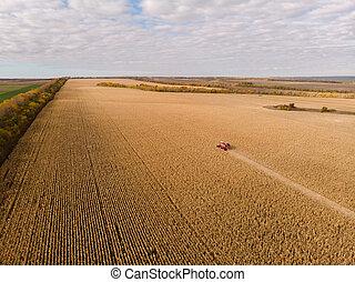 maïs, air, automne, champ, tir, récolte