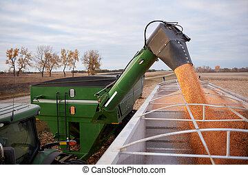 maïs, caravane, tracteur, semi, offloading