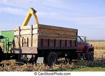 maïs, chargement, camion