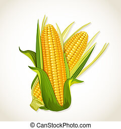 maïs cob, rijp