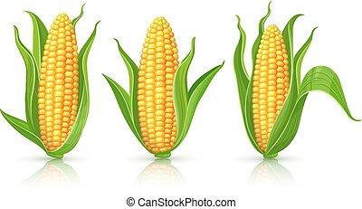 maïs, ensemble, isolé, épis