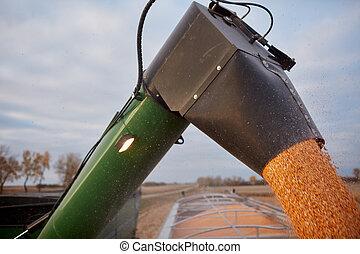 maïs, graine, remplissage, caravane, moissonneuse