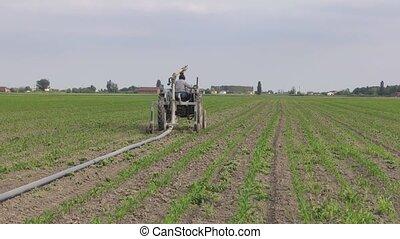 maïs, irrigation, 3, scène
