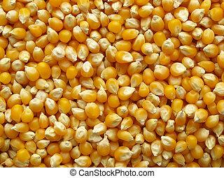 maïs, maïs, utile, ou, fond