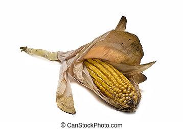 maïs, oor, vrijstaand, op, white.