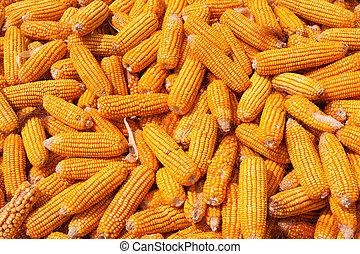 maïs, récolte, fond
