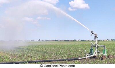 maïs, scène, irrigation, 2