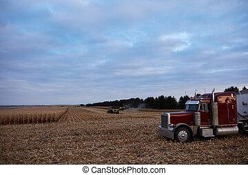 maïs, semi, grand, champ, attente, transport, route