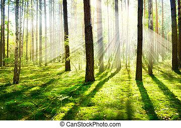 mañana, fog., brumoso, y, brumoso, bosque