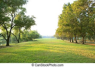 mañana, luz, en, parque público, con, árbol, planta, hierba...