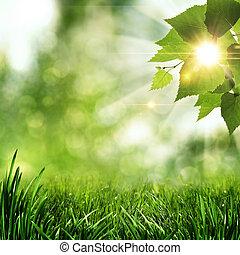 mañana temprana, en, el, verano, bosque, resumen, natural,...