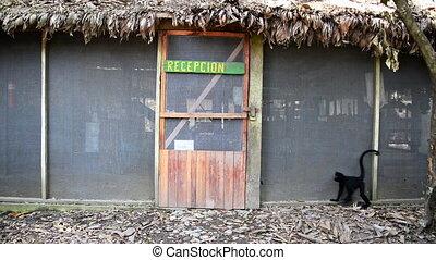 małpa, drzwi, pająk, otwarcie