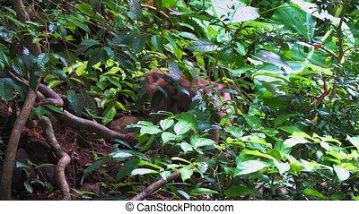małpa, przechadzki, przez, przedimek określony przed rzeczownikami, las