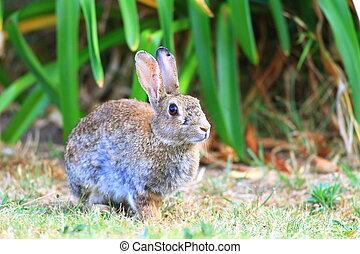 mały, łąka, królik, młody
