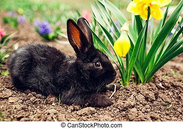 mały, czarnoskóry, niemowlę królik, posiedzenie, wśród,...